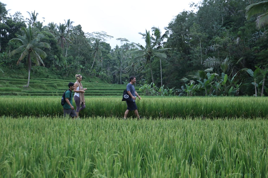TARO RICE TERRACE TOUR